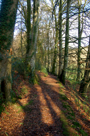 chapel wood spreacombe north devon