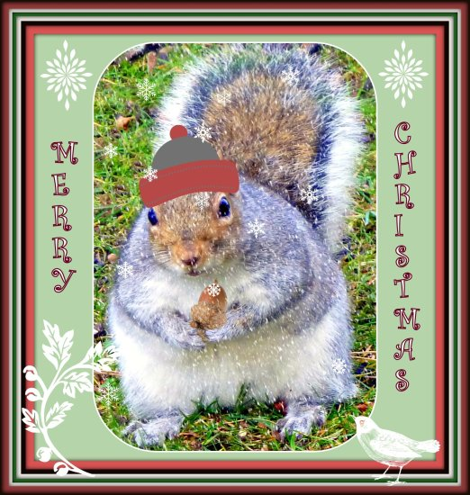 christmascard christmas squirrel