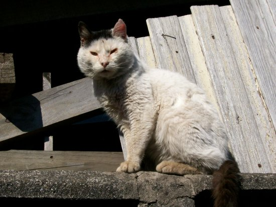 ugly old cat feo viejo gato