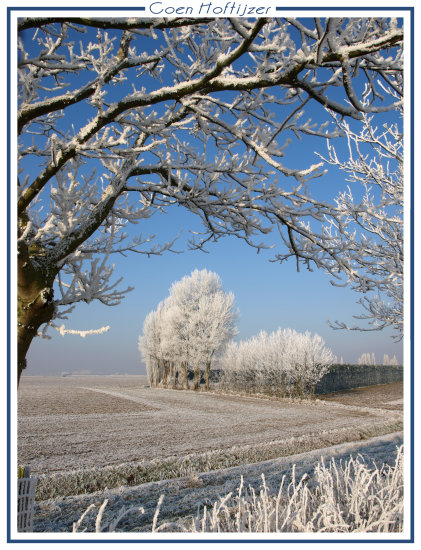snow ice tree trees nature landscape winter januari holland CH1988