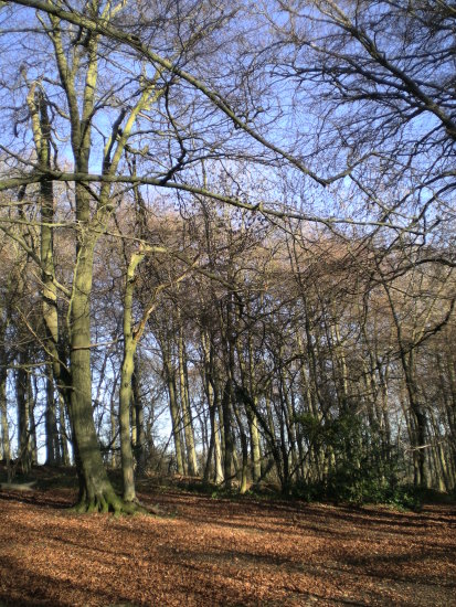 crickley hill gloucestershire woodland