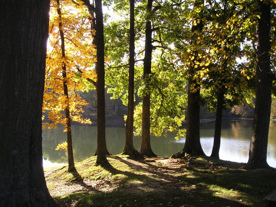 autumn comes to the south...although not as spectacular as in northeast US, it is worth spending ...