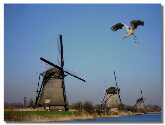 netherlands kinderdijk mill millclub ps bird nethx kindx waten archn millx birdx