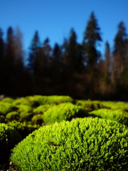 green tree color moss plant life