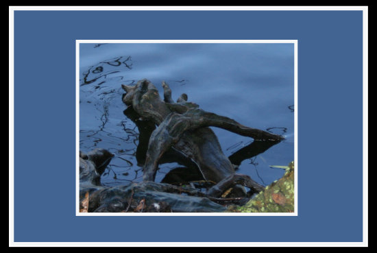 I dont know why this looked a bit scary to me. Its just a tree root in the water but its makes me...