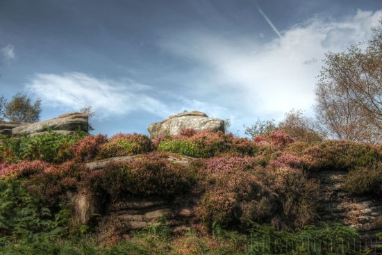 brimham rocks heather sky yorkshire