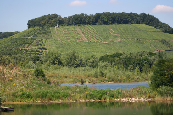 landscape nature moselle luxembourg