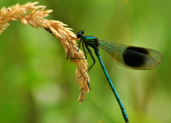 dragonfly grass summer