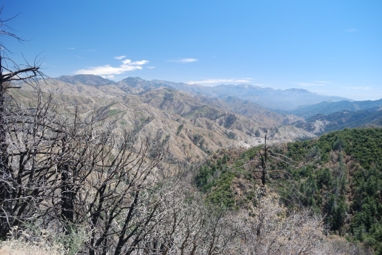Angeles National Forest, Southern California Red Box Road area 2009 forest fire burn area (The...