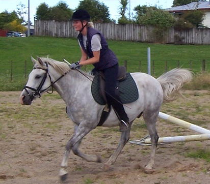 This is Buddy, one of the horses I'm exercising at the local pony club.