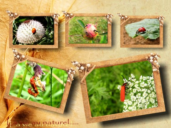 Bugs collage ants ladybird insect flowers