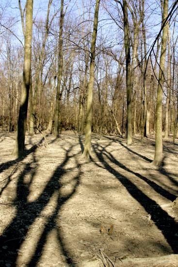 trees shadows nature wildlife abstract