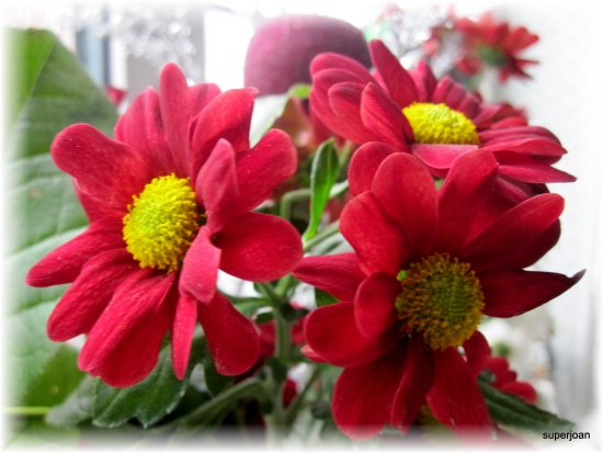Flowers at Christmas