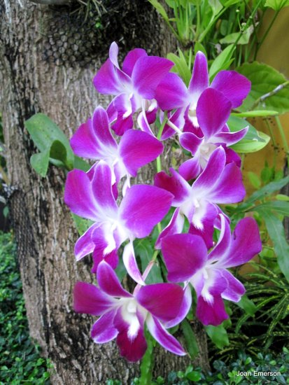 Saying goodbye to Thailand with Orchids