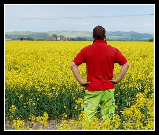 me man carl rape rapeseed field gold favesongs yellow somerset somersetdreams