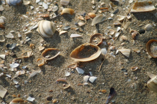 the beach with shell