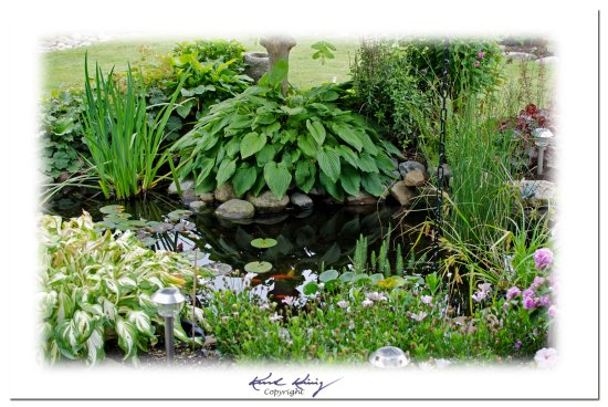 Part of my pond...on a cloudy day..;-)