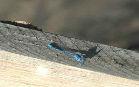 Insects Dragon Flies