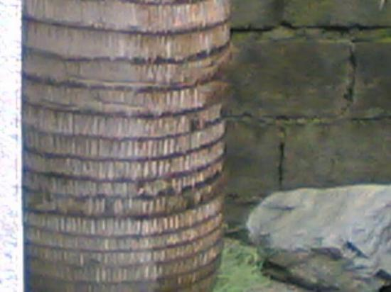 palm tree's trunk and  stone,