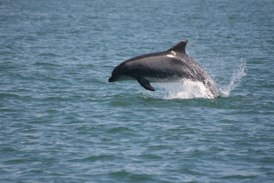 dolphin sea mammal cetacean animal bottlenose