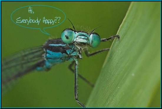 Damselfly portrait