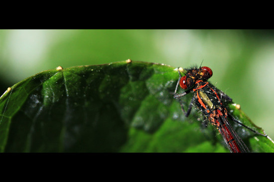 Damselfly May 2012