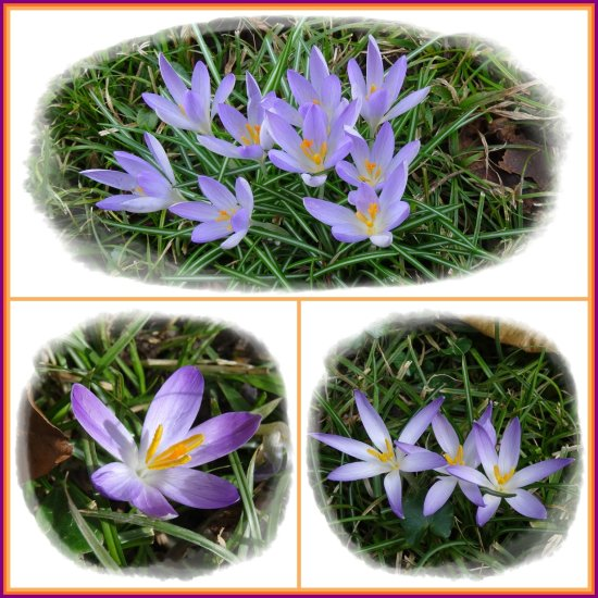 crocus colours springtime 2014 collage
