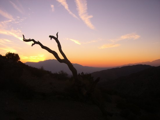 Joshua Tree in California