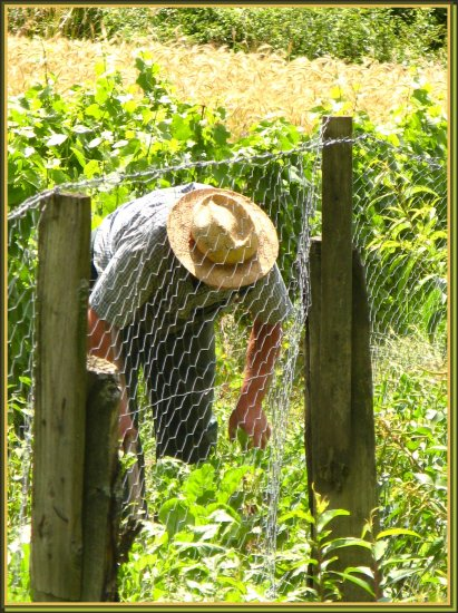 wineyard winegrower nature portrait France spiky fence summer people