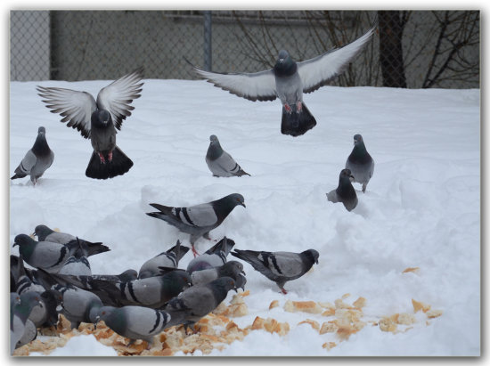 birds snow cold