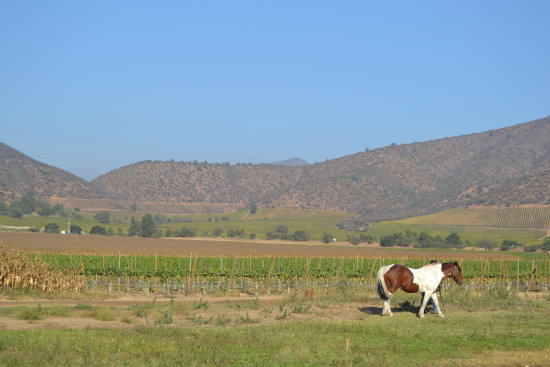 Chocalan Vineyard in Maipo Valley