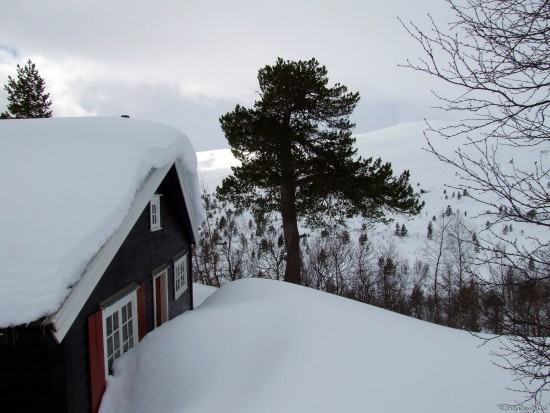 Landscape Norway Snow Summerhouse Mjolfjellet