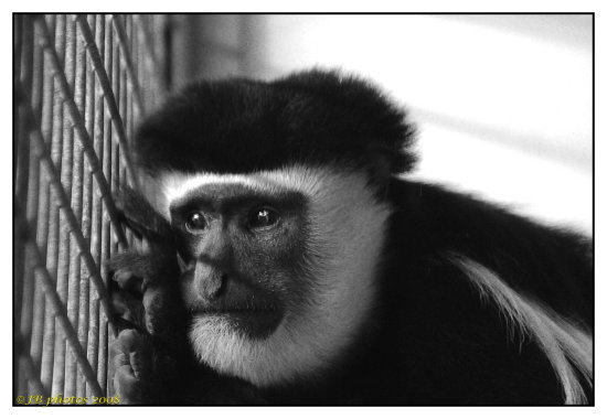 monkey face nature wildlife zoo expression