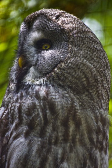 Owl Marwell Zoo Captive Wildlife