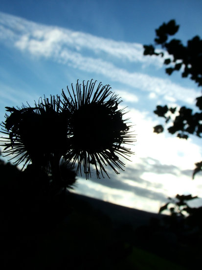 silhouette blue black spikey