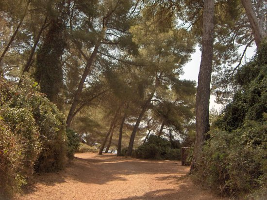 The ile of l�rins