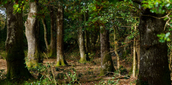 Trees Woods Autumn