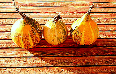 spain andalucia periana gourds
