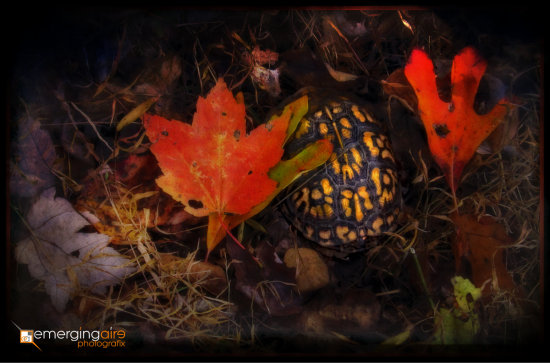 leaves autumn fall cute yellow red orange turtle nature dark