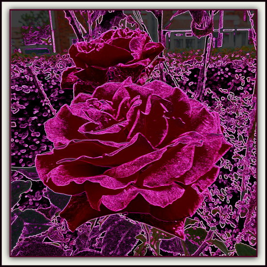 digitalartclub roses