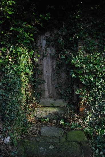 ivy green leaf door secret garden overgrown