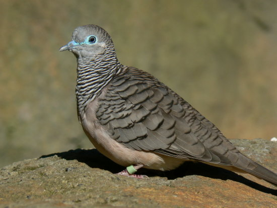 animal bird dove