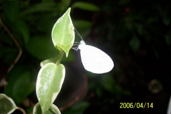 Nanay's garden: Butterfly on a leaf