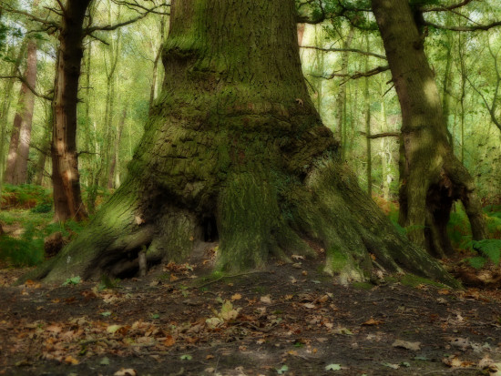 forest woodland tree