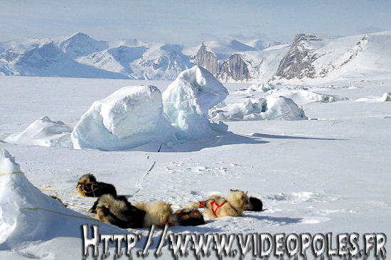 Arctic sledge dog Iceberg Arctique Traineau Chien Glace Ice Baffin Nunavut