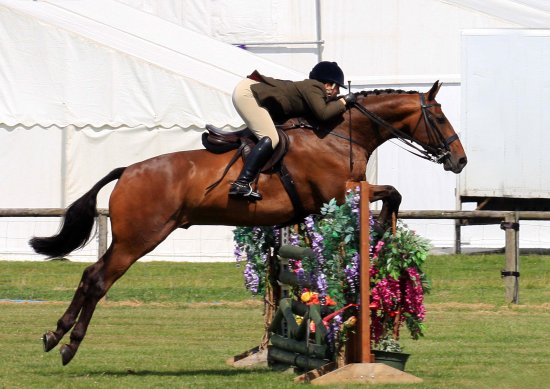 bakewell show derbyshire working hunter horse