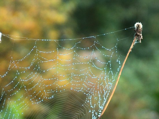 spiderweb morning dew