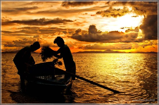 people sunset boat sea weeds