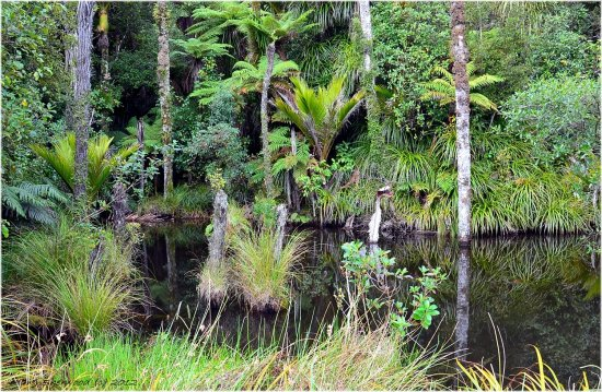 reflectionthursday rainforest newzealand
