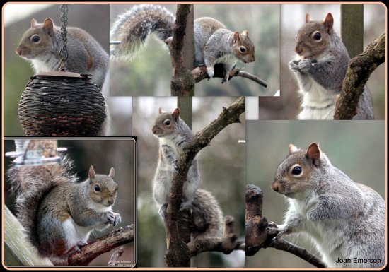 Squirrels garden